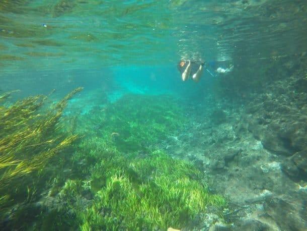 Flutuação no Aquário Natural