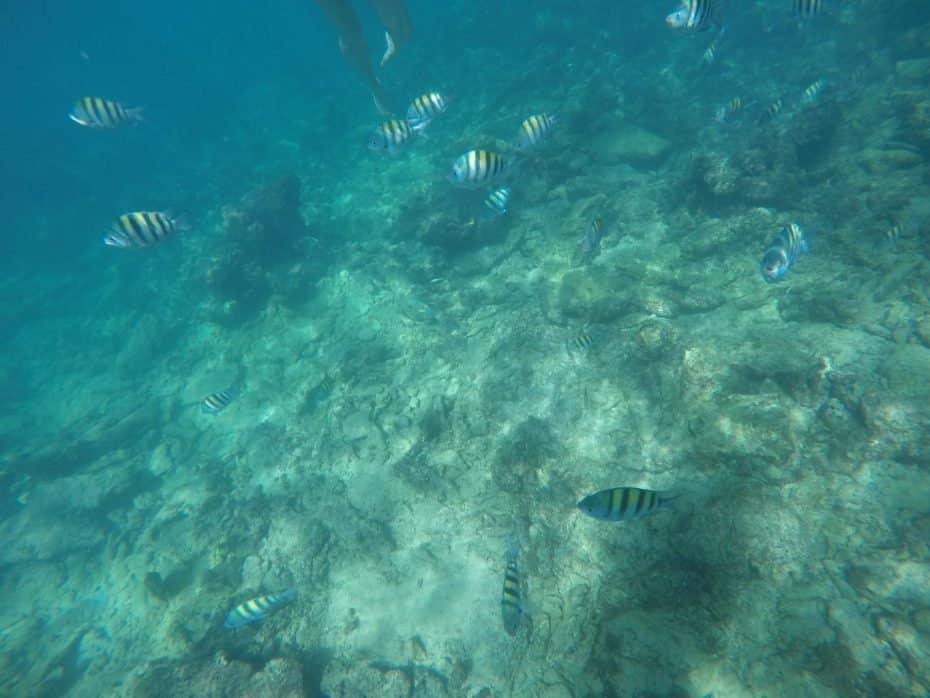 peixinhos da Isla Saona
