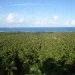 Praia do Gunga Alagoas: Um paraíso escondido no litoral de Alagoas
