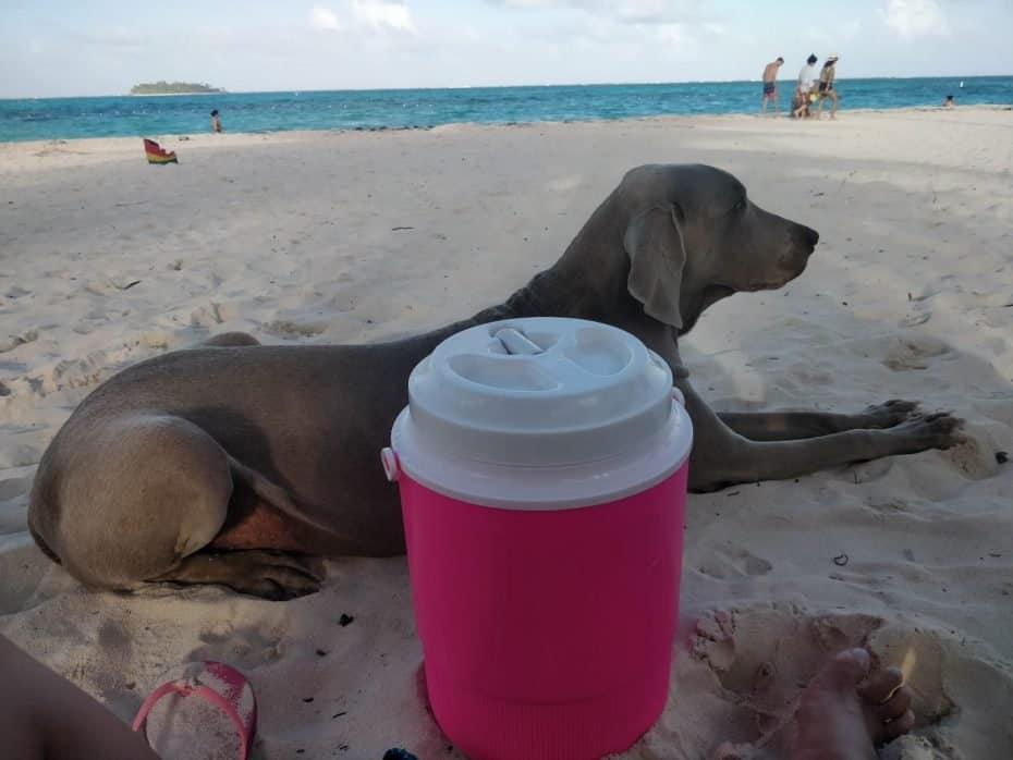 Aproveitando a praia Spratt Bight com meu amigo