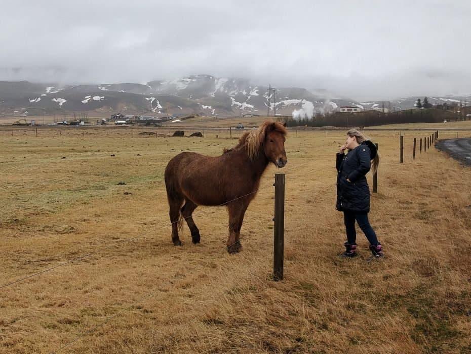 Como são os cavalos da Islândia