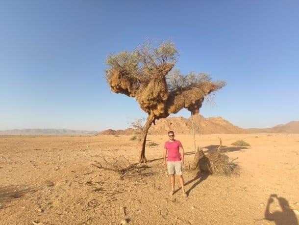 arvores na Namibia