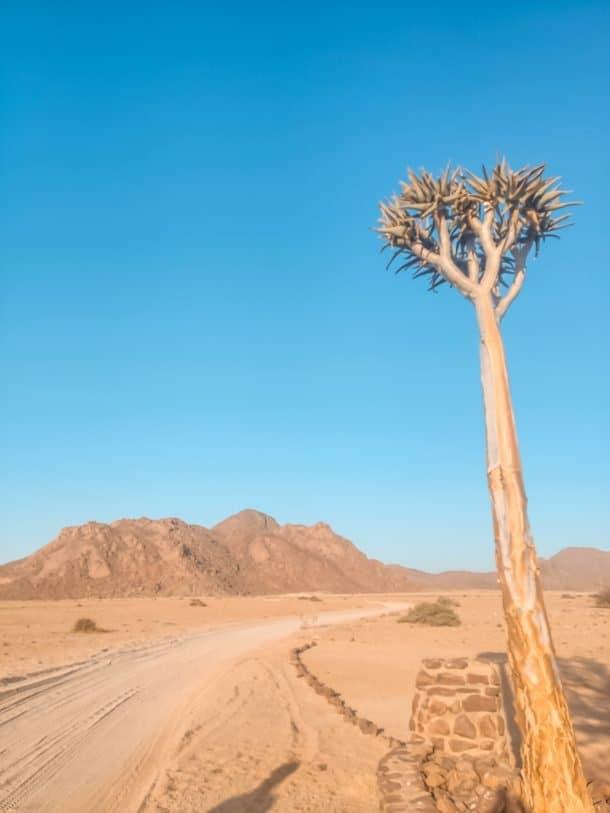 vegetação da Namíbia