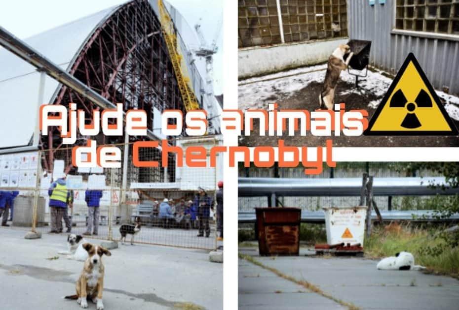 Animais de Chernobyl precisam de ajuda