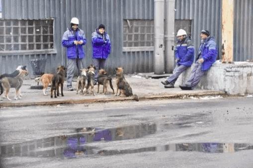 Animais de Chernobyl