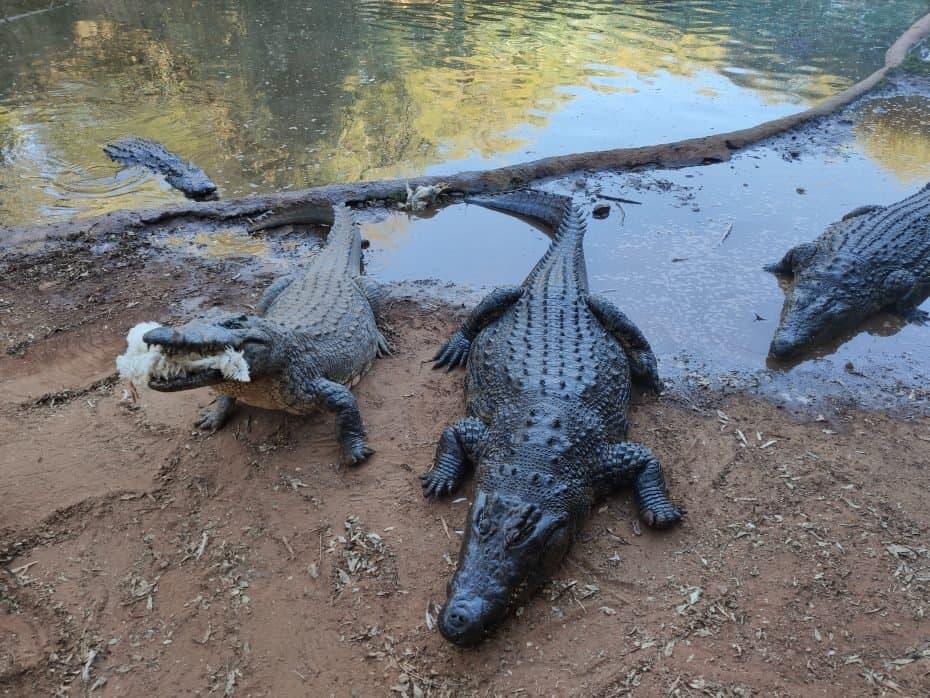 crocodilos, Sun City