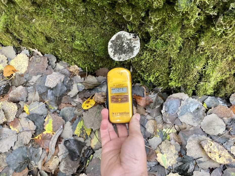 cogumelo radiativo no solo de chernobyl
