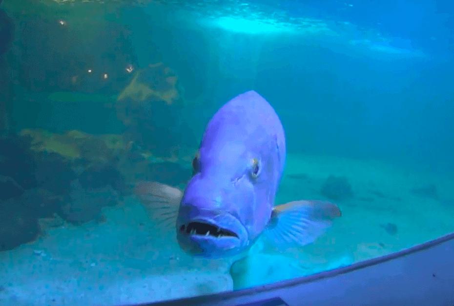 A ilha dos aquários em Porto Seguro fechou