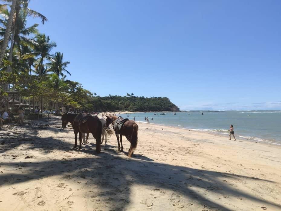 Passeios de cavalos na Bahia