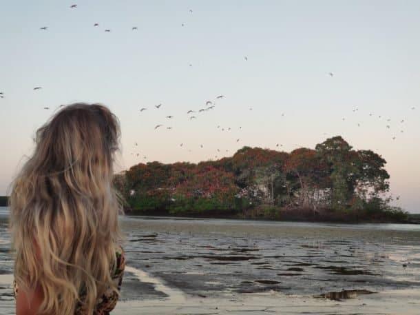 Revoada dos Guarás Delta do Parnaíba