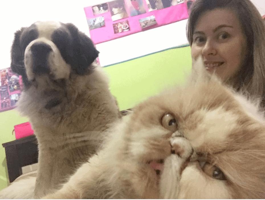 documentos para cães e gatos