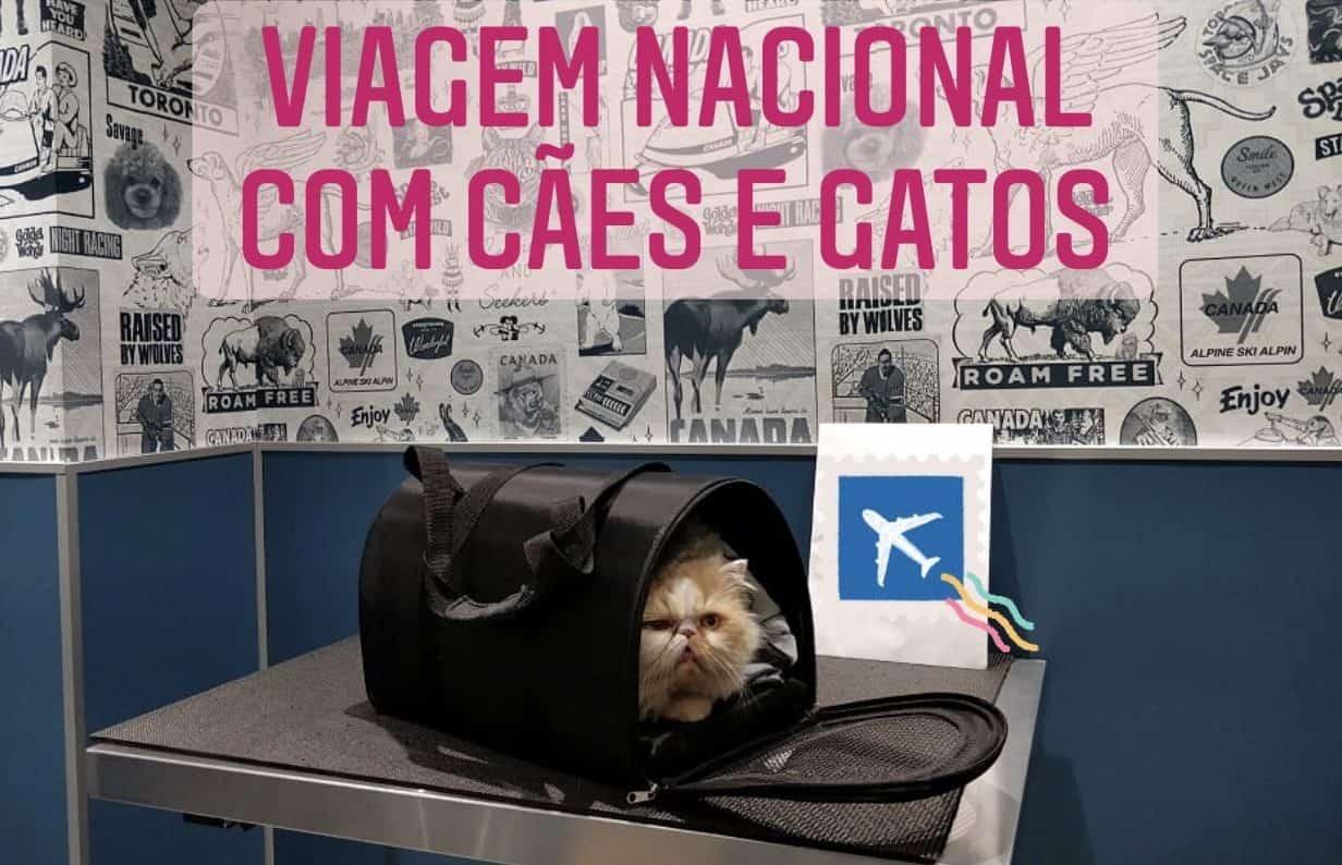 Viagem Nacional com animais de estimação