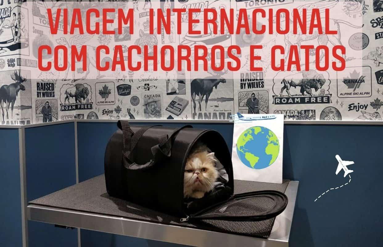 viagem Internacional com animais de estimação